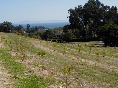 4/21/2001 - Southern view of meyer lemons, islands and ocean.